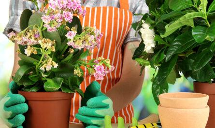 Как избавится от комнатных цветов