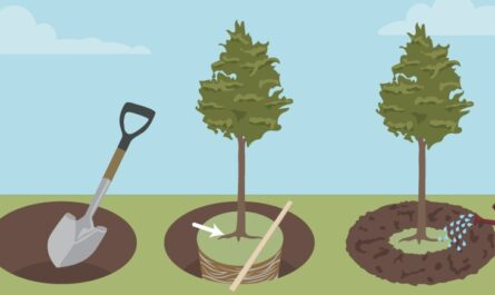 Как посадить дерево